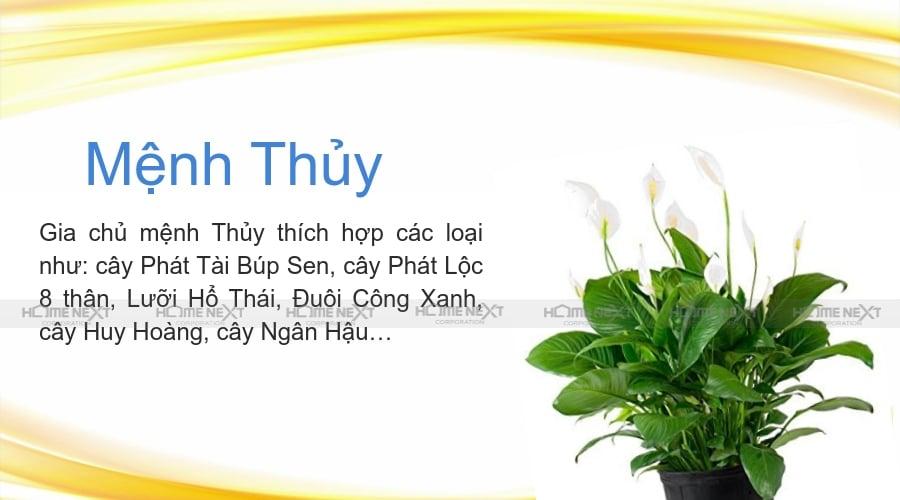 cay-menh-thuy