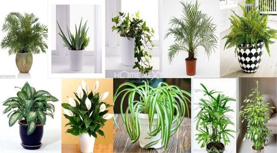 Một số loại cây thích hợp để trồng trong phòng ngủ