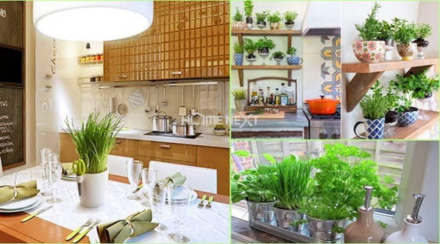 Cây xanh phòng bếp có tác dụng thanh lọc không khí