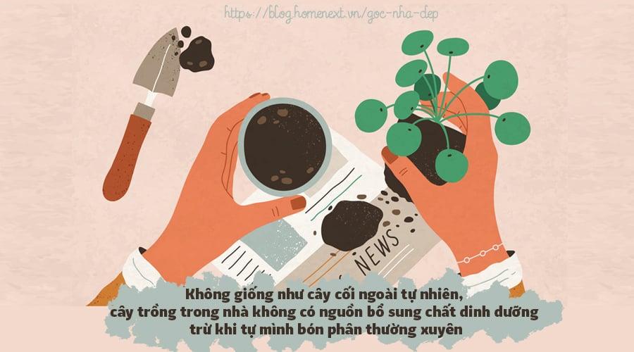cách trồng cây trong nhà