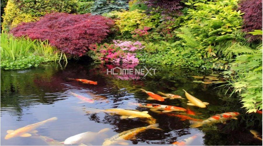 Thỏa sức ngắm nhìn những chú cá Koi bơi lội trong hồ
