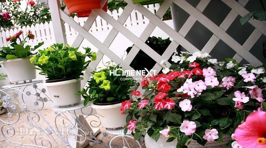 Sắc hoa nổi bật nơi ban công nhà phố