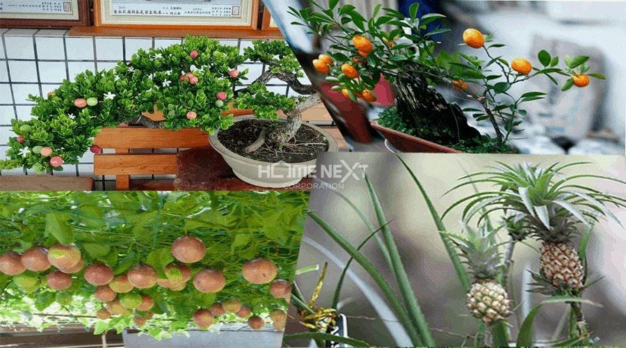 Một vườn cây ăn trái nho nhỏ trên sân thượng