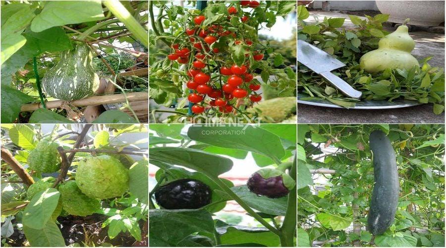 Vườn rau sạch với đủ các loại hoa, quả đáp ứng nhu cầu hằng ngày của gia đình