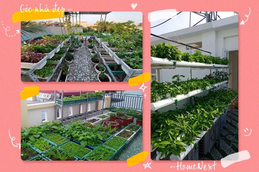 Ý tưởng vườn rau trên sân thượng vô cùng độc đáo
